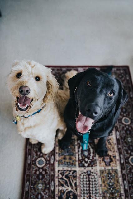 Long & short haired dog breeds