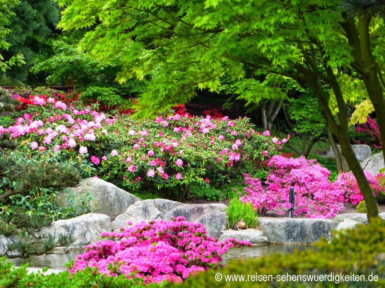 Bunter Japanischer Garten in Planten un Blomen, dem schönsten Park in Hamburg