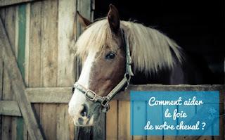 Soulager le foie du cheval