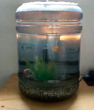 5 gallon water jug fish tank aquarium water containers for Fish tank water cooler