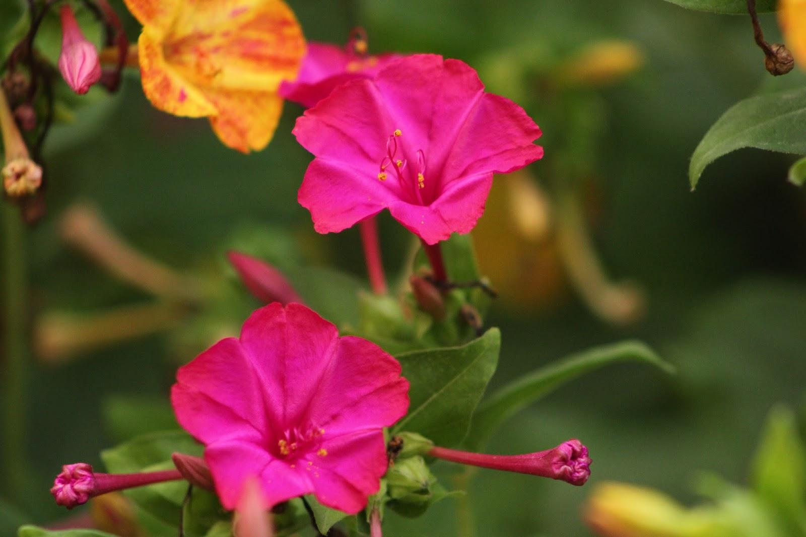 ARTE Y JARDINERÍA : Flores y plantas de Arte y Jardinería
