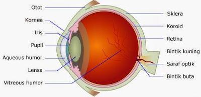 Bagian - Bagian Mata dan Fungsinya