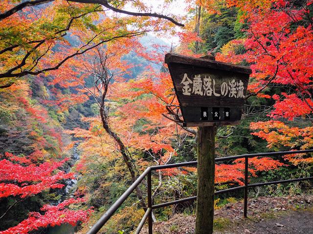 金蔵落としの渓流 紅葉