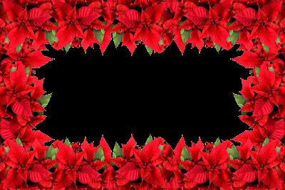 Moldura Nova Flor de Natal 2016 -  1 foto (1)  png