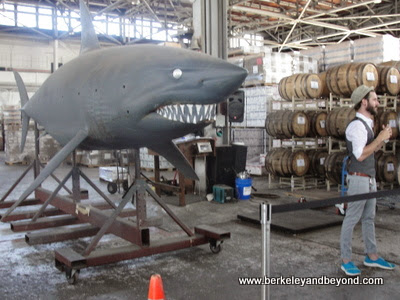 "celebrity shark Bruce from ""Deep Blue Sea"" movie at St. George Spirits in Alameda, California"