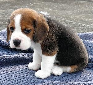 Puppies Are Beautiful: Sad Puppy