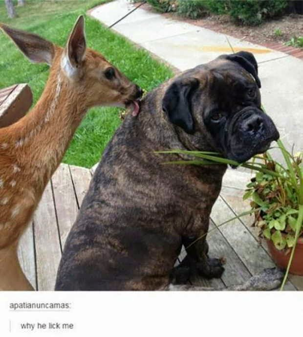 Funny animals of the week, animal photo, funny pictures