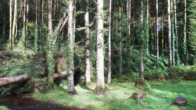 Metsä, kuuimetsä puro