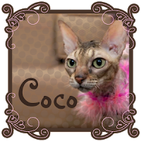 About Coco