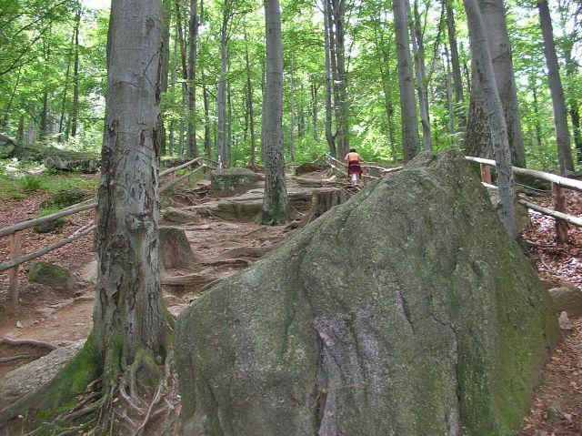 skały, Chojnik, las, droga, ścieżka, szlak