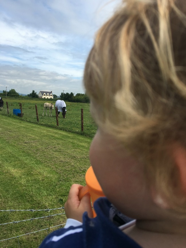 Walnut-tree-farm-park-A-Toddler-with-cup-looking-at-horses