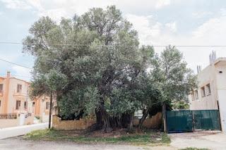 Ταχύτητα φύτευσης δέντρο χρονολόγηση