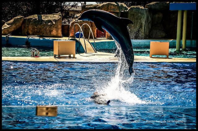 dauphin marineland