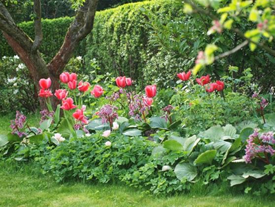 blomsterbed inspiration HavePlaner og PlanteBegejstring: FRA SKVALDERKÅL TIL BLOMSTERBED blomsterbed inspiration