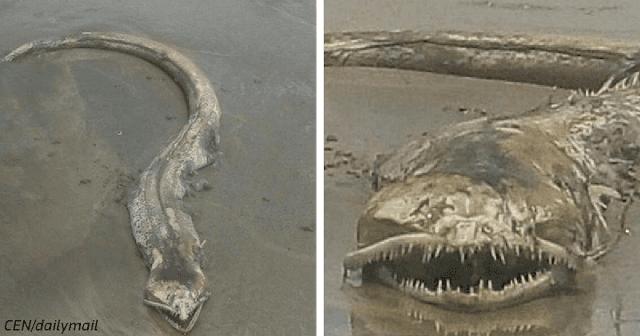 Морской змей или мертвый угорь? Это чудище нашли на мексиканском пляже!
