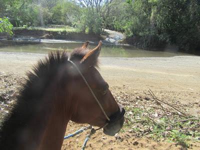 durch den Fluss mit Pferd