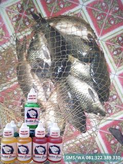 Essen Untuk Umpan Ikan Mas Kilo Gebrus