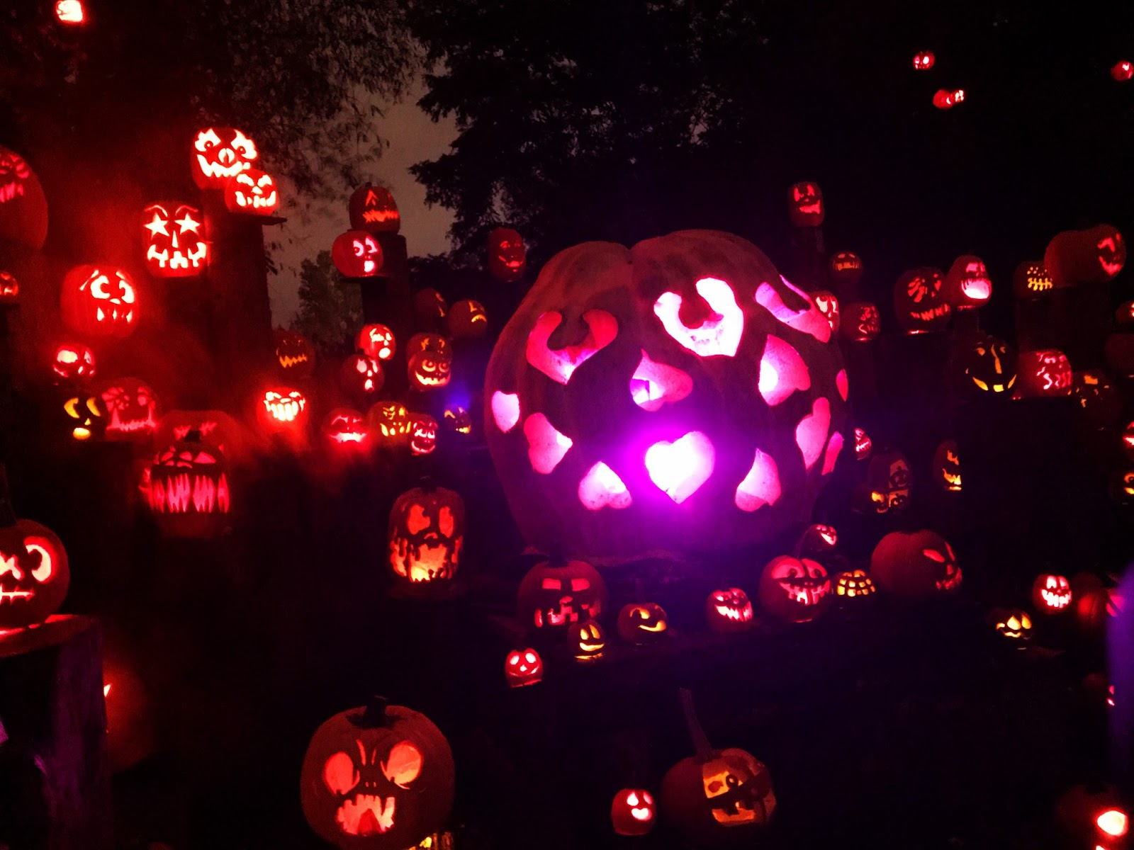 evan and lauren's cool blog: roger williams park zoo jack-o-lantern