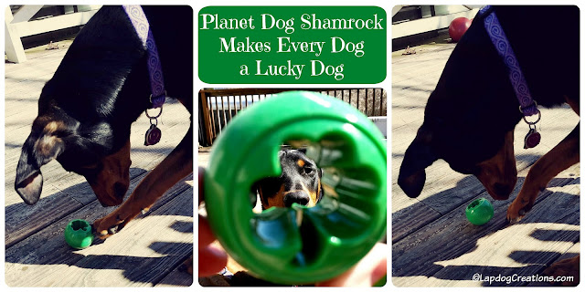 Every Dog is a Lucky Dog When they Have a #PlanetDog Shamrock #DobermanPuppy #dogtoy #rescueddog #adoptdontshop #LapdogCreations ©LapdogCreations