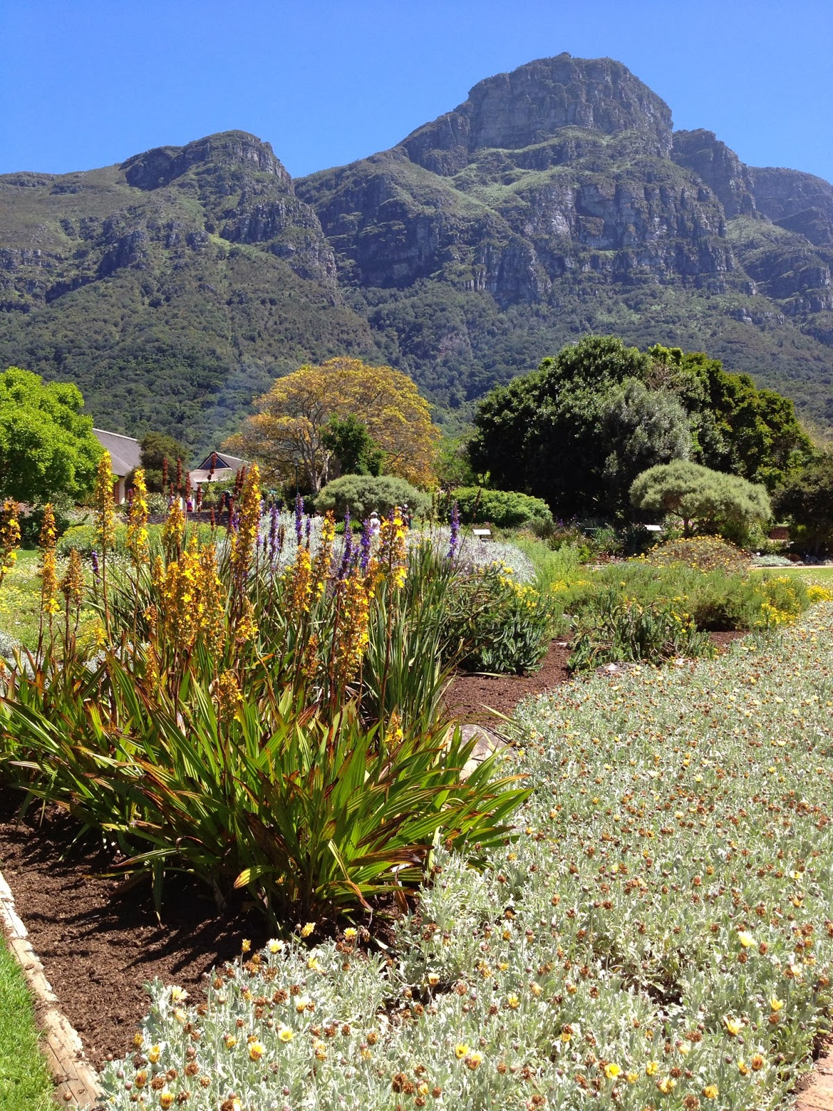 Cape Point Tour - Kirstenbosch National Botanical Gardens