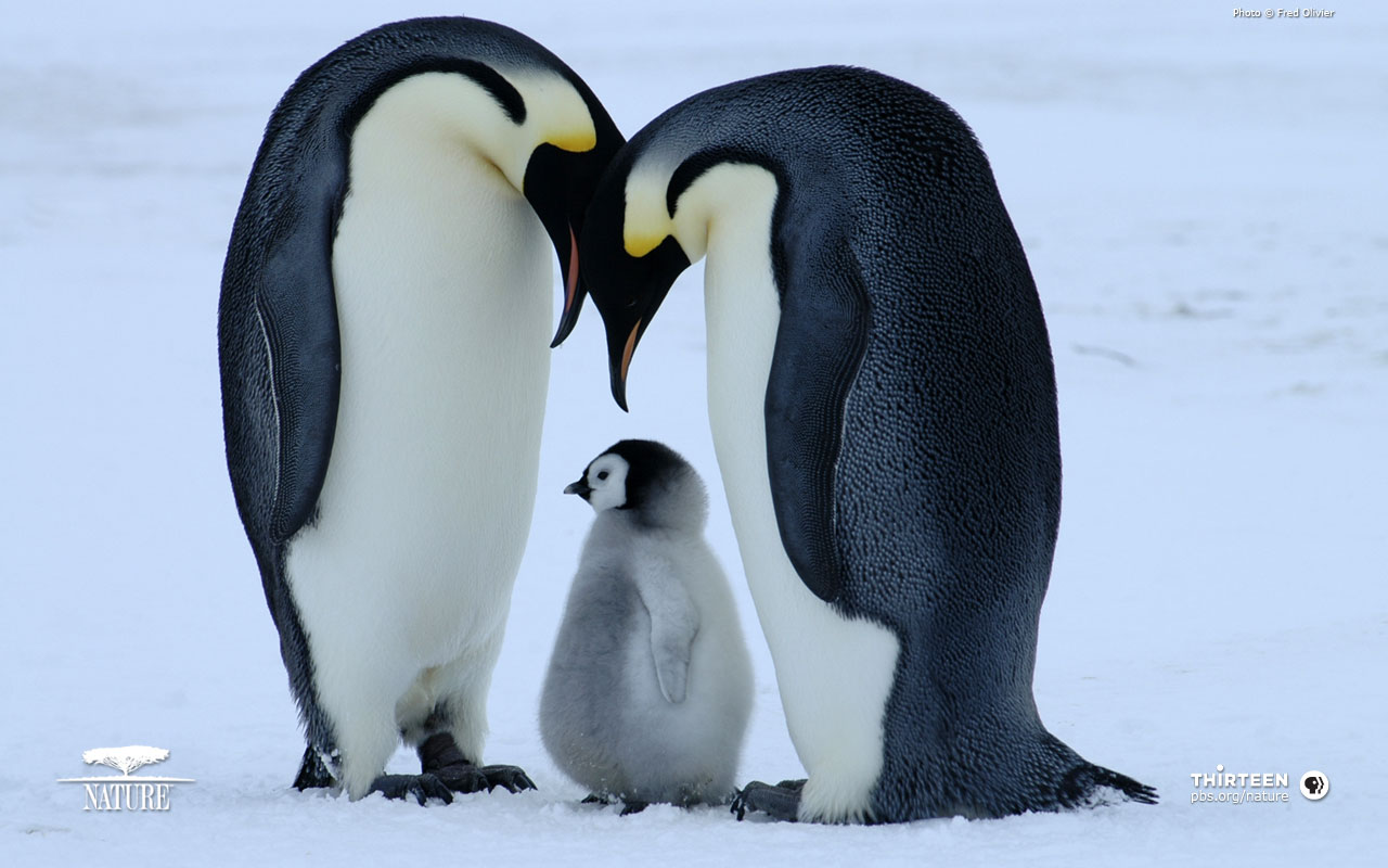 Penguin Pictures 7