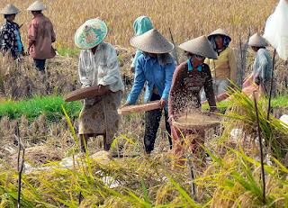 Orang Indonesia adalah kolektif