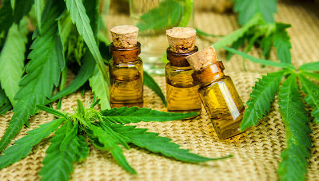 Yes, Cannabis Oil Is Good For You: Here's Why