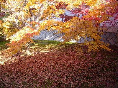 東福寺の紅葉〔絶景〕 黄金色に染まる三ツ葉楓