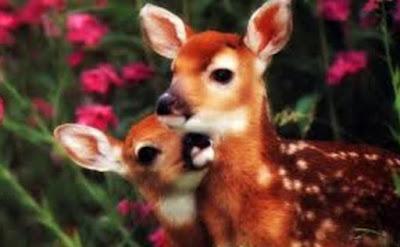 Gambar Fauna Rusa dan Anaknya Wallpaper HD