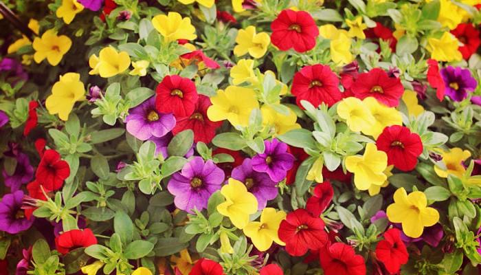 Plantas de jardín y exterior resistentes