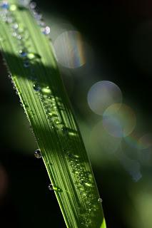 Vetiver Rain