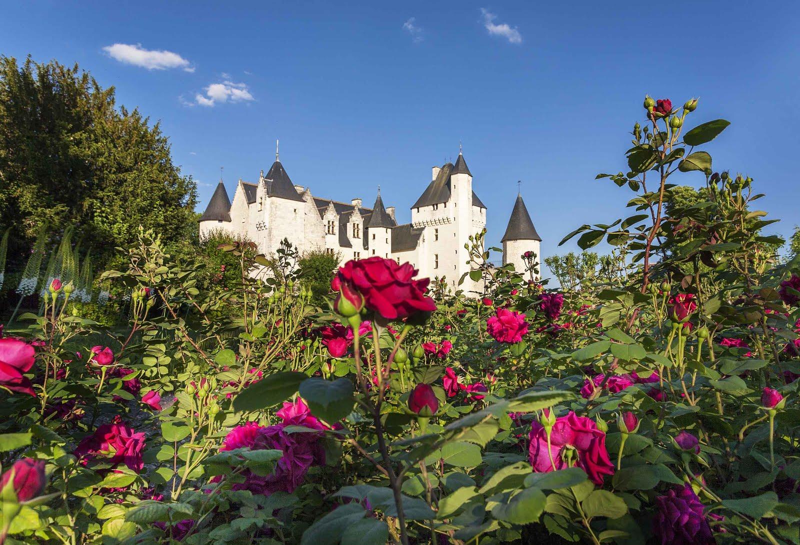 450 Rosa Al Chateau Du Rivau In Francia In Festa Il 2 E 3 Giugno In