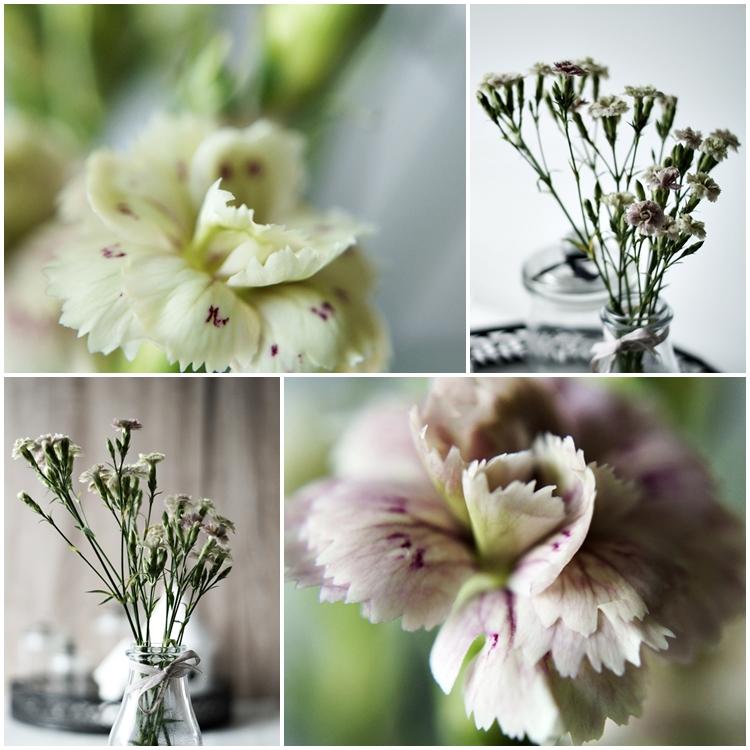 Collage von Blüten einer Mininelke { by it's me! }