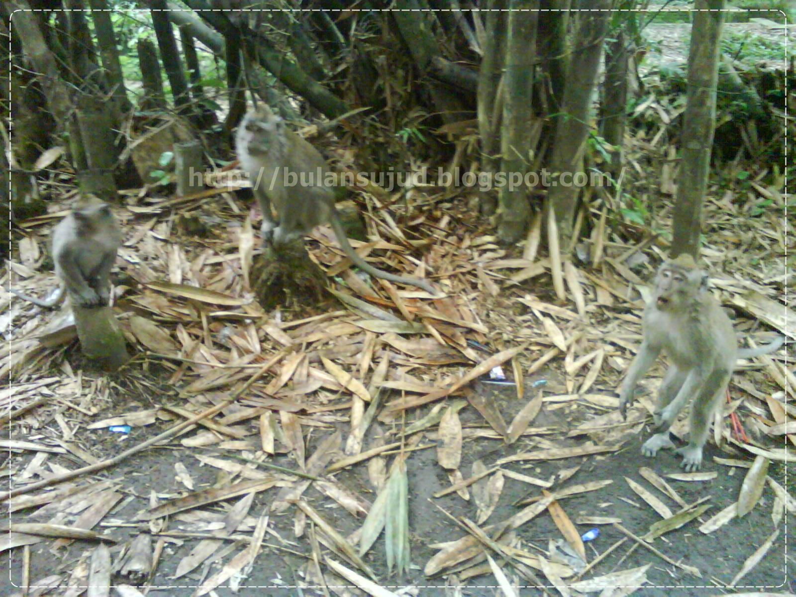 Bulansujud Wisata Alam Hutan Bambu Lumajang