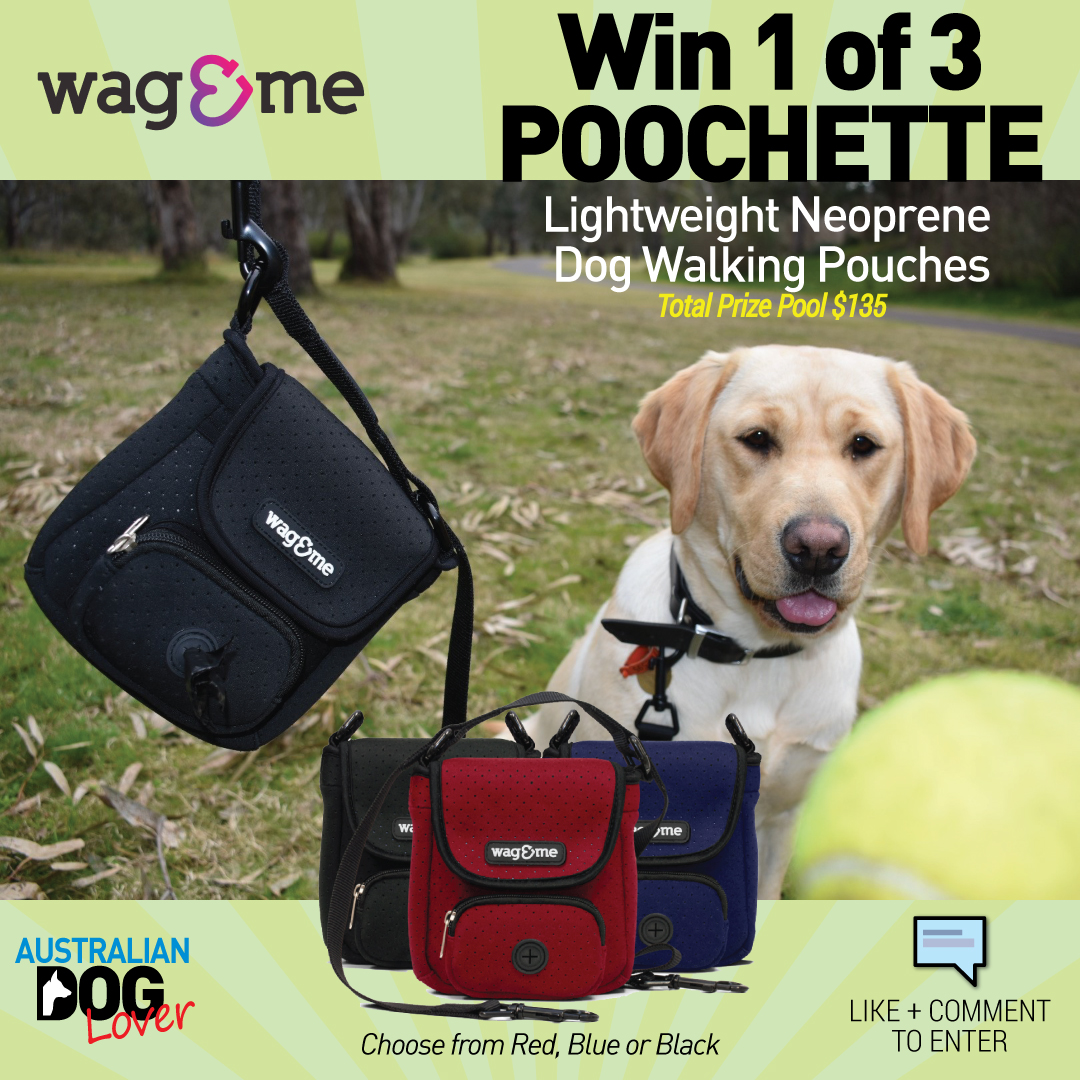 The Poochette 5-in1 dog walking pouch - Australian Dog Lover Competition