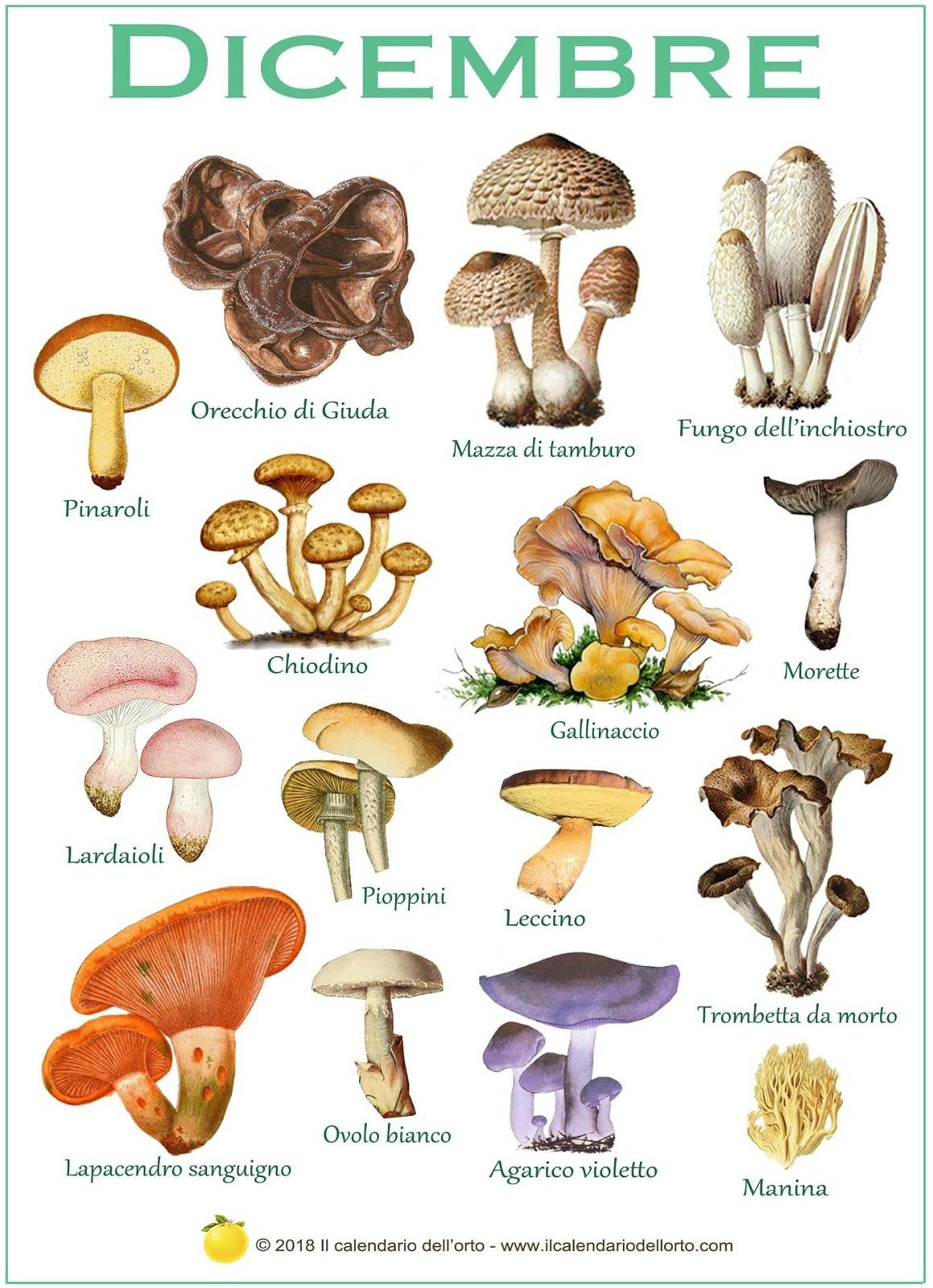 i funghi che si trovano a dicembre