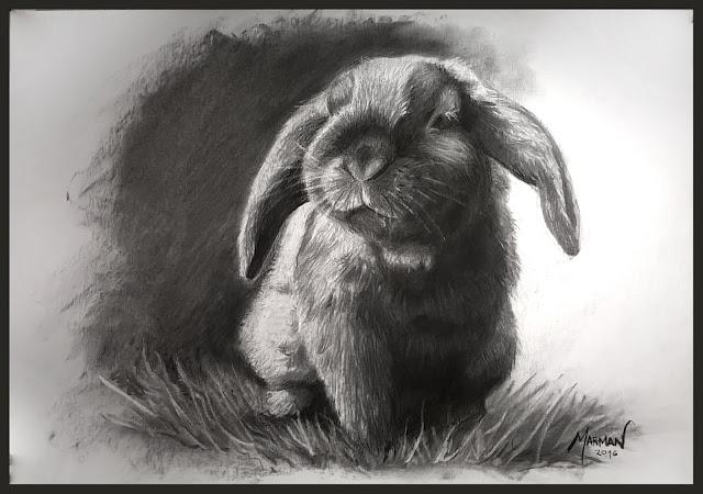 retrato conejo