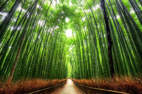 http://4.bp.blogspot.com/-09PTiaDF9Ks/ULninjDIY8I/AAAAAAAA6bM/rZCyLt9pTOY/s1600/Top-10-Tree-Tunnel-007.jpg