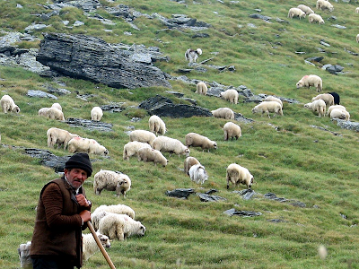 A shepherd and his sheep in Romania