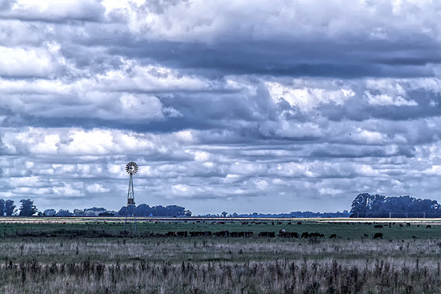 paisaje campestre molino,vacas y nubes