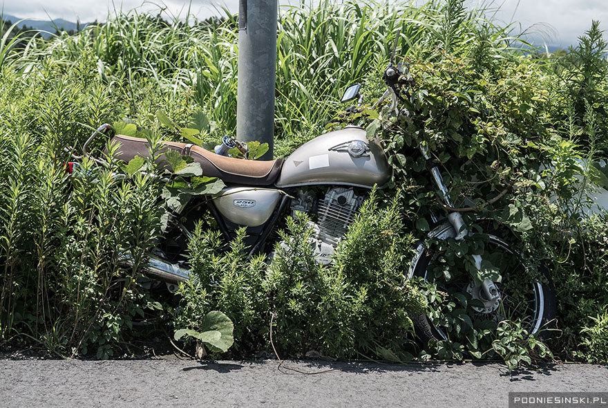 A chained-up motorcycle is slowly absorbed into the field - Never-Before-Seen Images Reveal How The Fukushima Exclusion Zone Was Swallowed By Nature