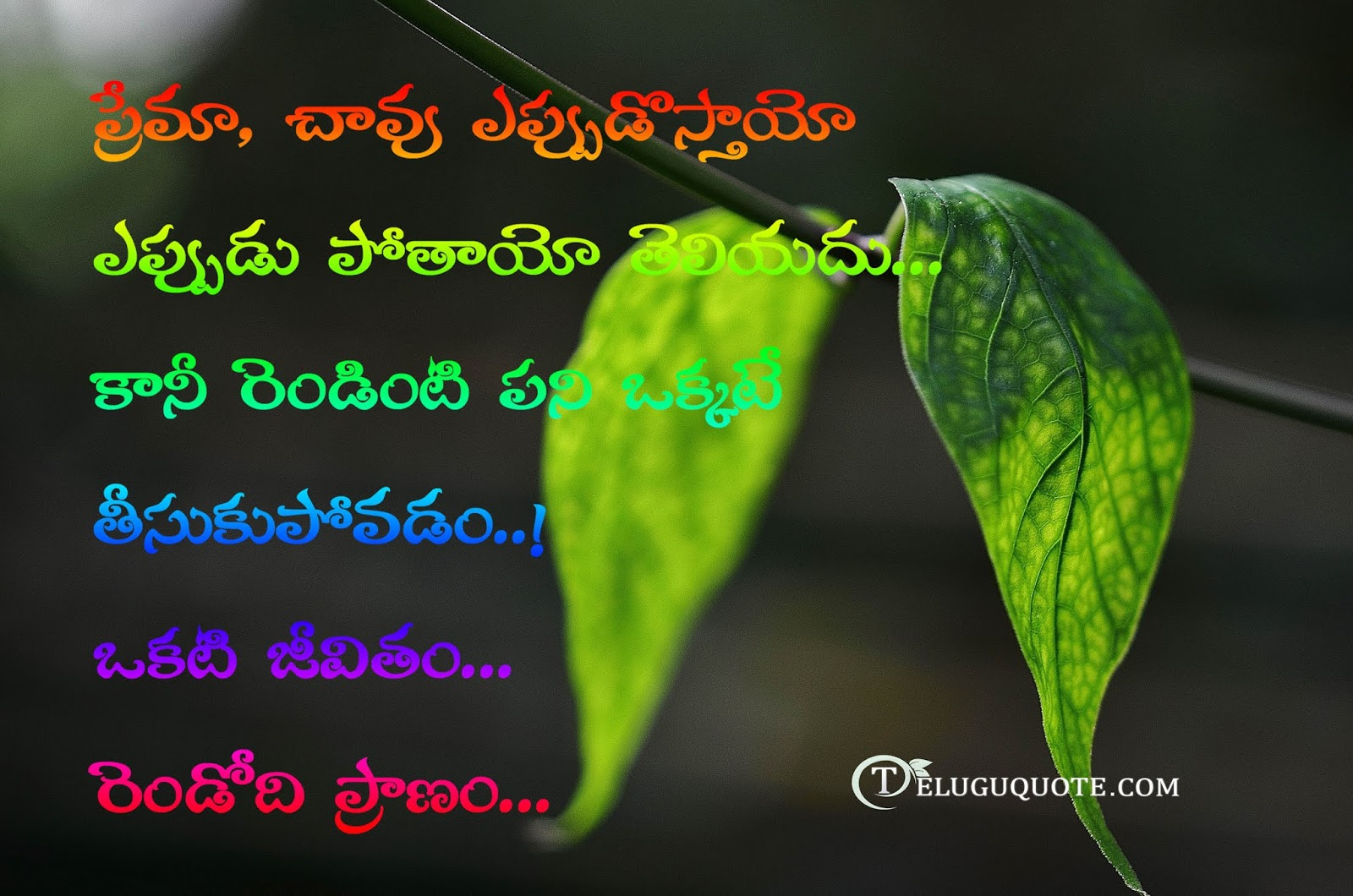 Love Death Quotes In Telugu Telugu Quotes