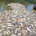 Ringkasan Materi Pencemaran, Air, Tanah, Udara Dan Suara, Lengkap Dengan Penanggulangannya