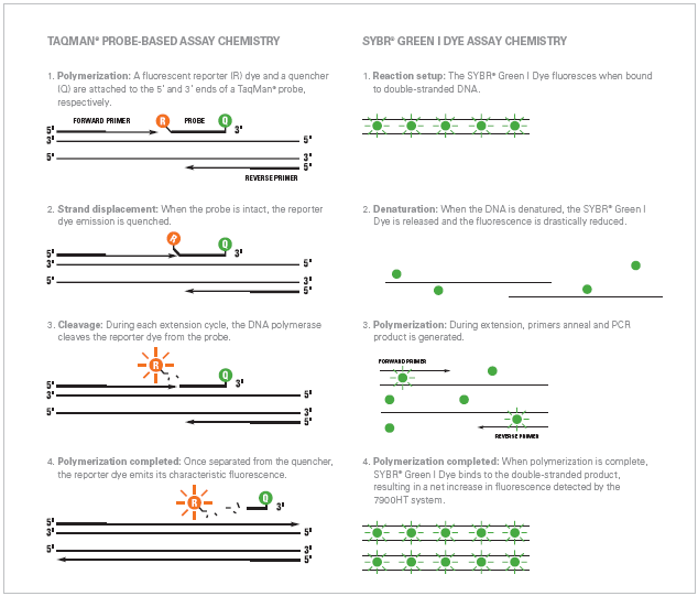 Bio-Resource: TaqMan Assay Vs SYBR Green Assay