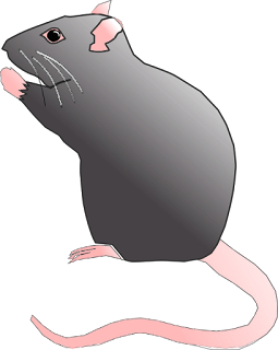 mouse is a domestic animal