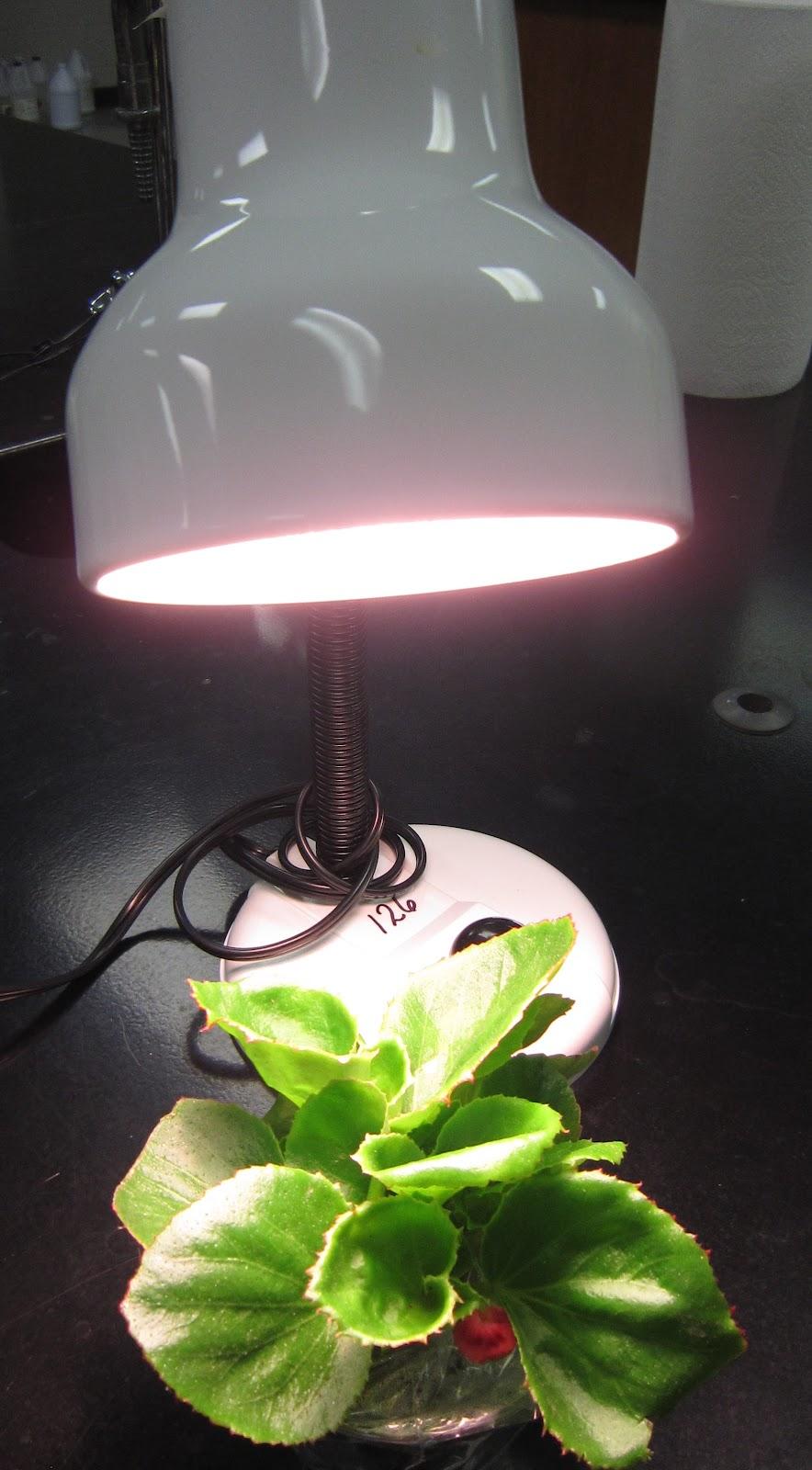 Fan Plant Transpiration