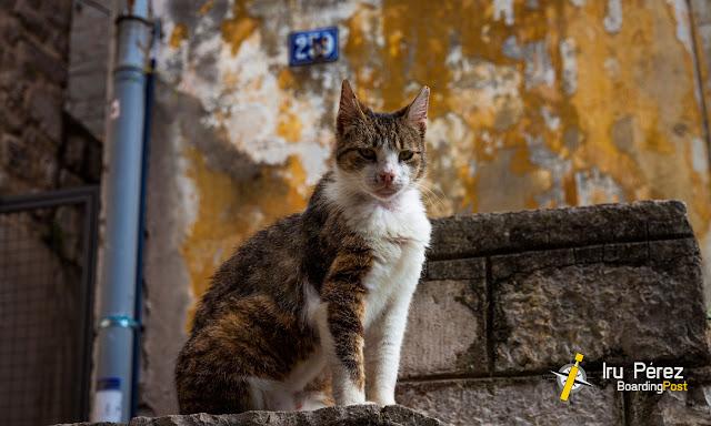 Gato en Kotor, Montenegro