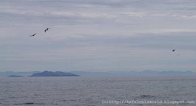seagulls, Kefalonia
