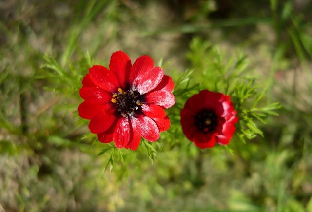 Rośliny jednoroczne i dwuletnie