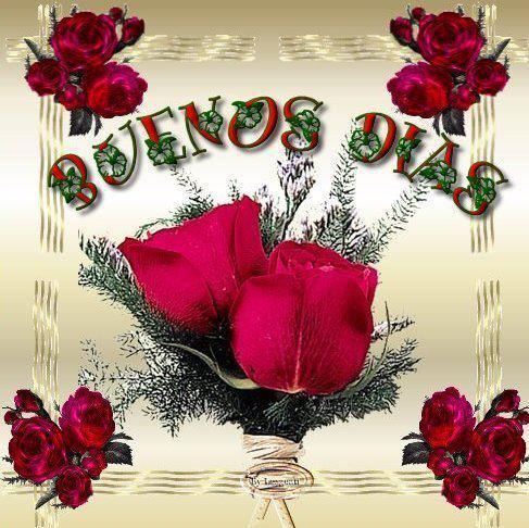 rosas Buenos Dias